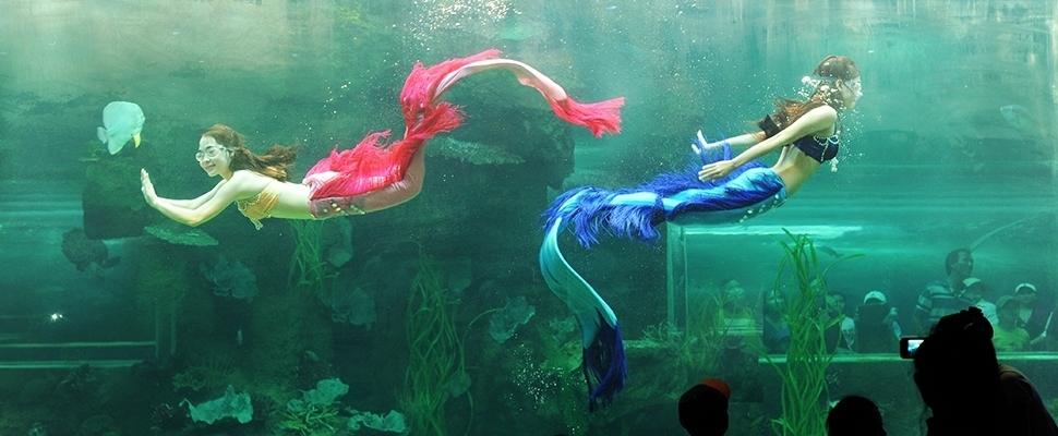 Aquapark in Fukuoka Vietnam Vinperlland