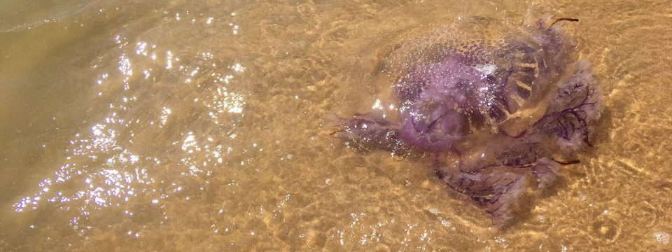 Медузы на острове Фукуок