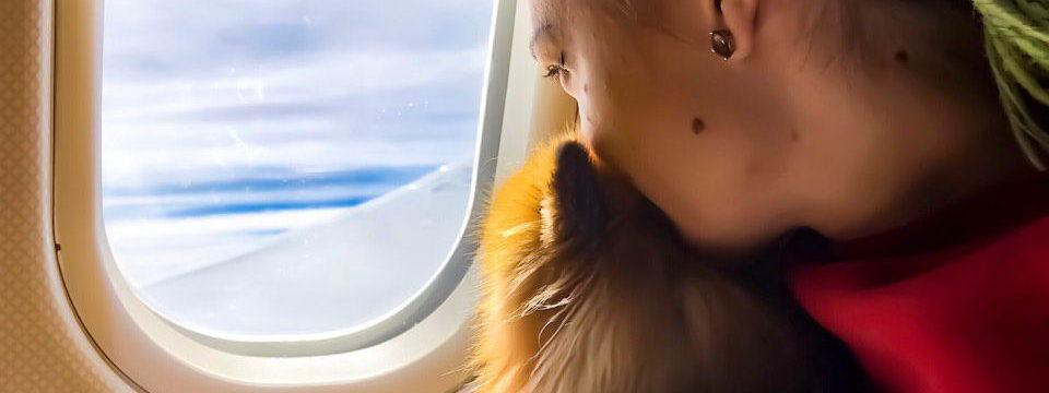 Путешествие во Вьетнам с собакой